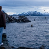 Whale-watch Nyksund I