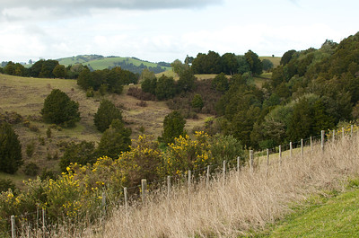 North of Auckland 29