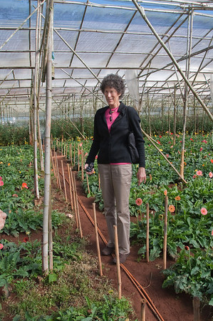 Beth in one of the thousands of Dalat greenhouses.