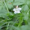 Flower_0421