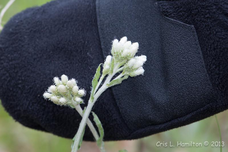 Flower_0455