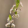 Flower_0639