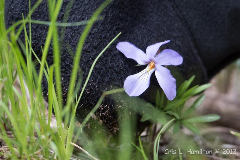 Flower_0642