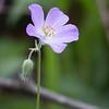 Flower_0705