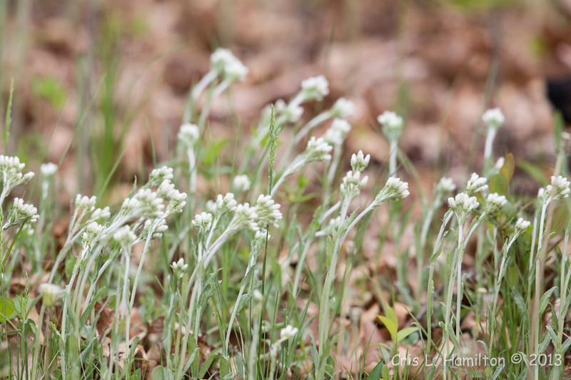 Flower_0456