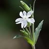Flower_0442