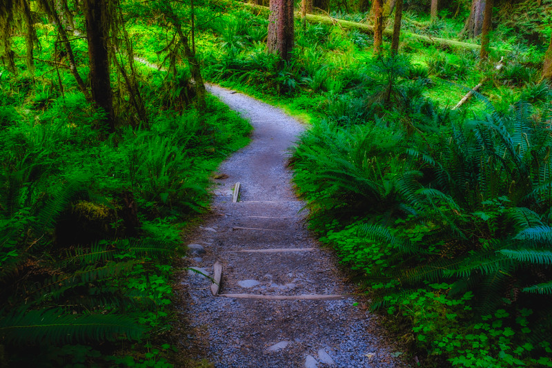 """TRAIL TO THE """"HALL OF MOSSES"""""""