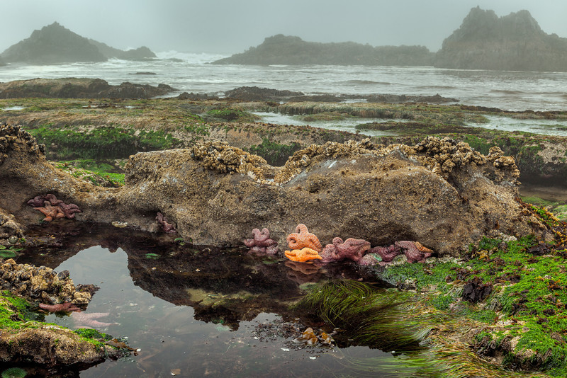 "TIDAL POOL AT SEAL ROCK STATE PARK.  A SMORGASBORD OF ""LIVING CREATURES"" - SEA STARS, BARNACLES, ANEMONES, MUSSELS AND EEL GRASS, ETC."