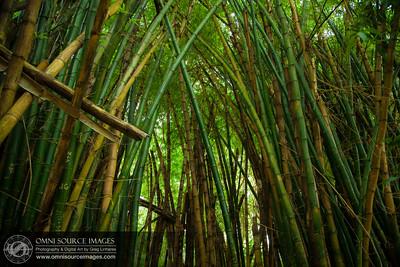 035_Byodo-In_Temple_Oahu