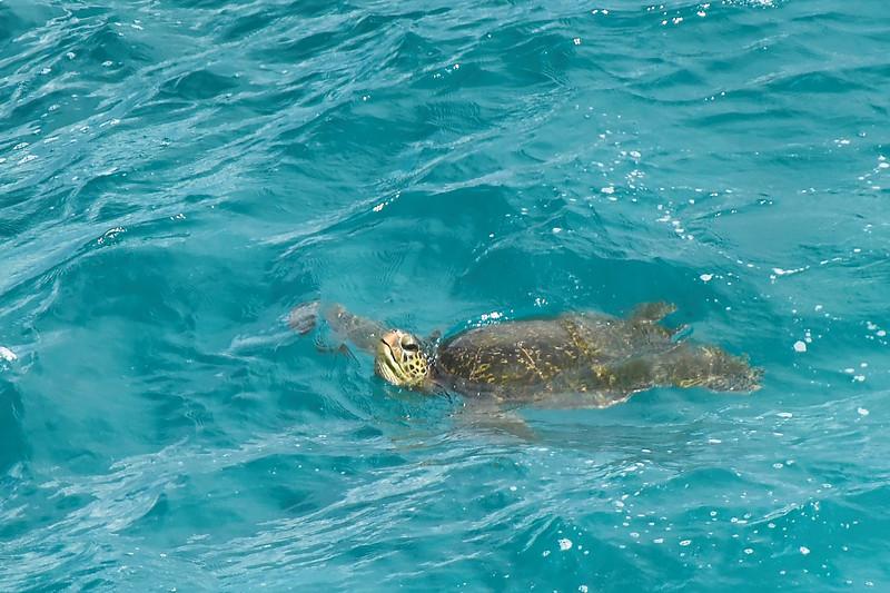 Winward Side - Blowhole Area - Sea Turtle