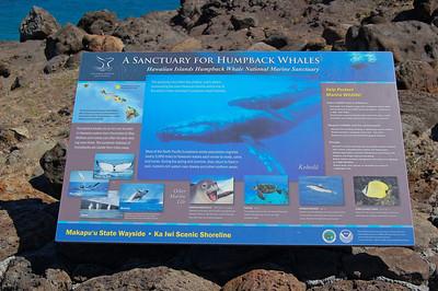 Humpback Whale Display
