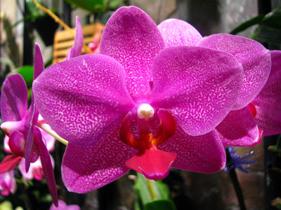 another beautiful orchid along the wall of our hotel, the Miramar at Waikiki.