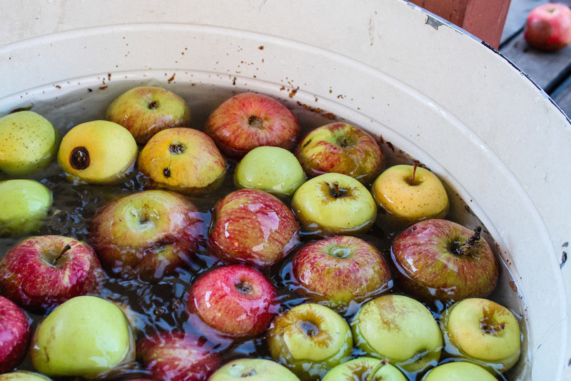 washing our apples before the pressing