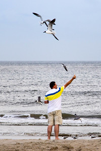 Man Feeding Seagulls at Caswell Beach (28 May 2016)