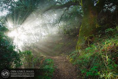Oakland Hills Sunbeam Trail