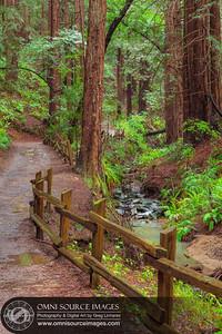 Stream Trail - Redwood Regional Park - Oakland, CA