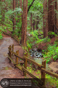 Stream Trail - Redwood Regional Park - Oakland, CA