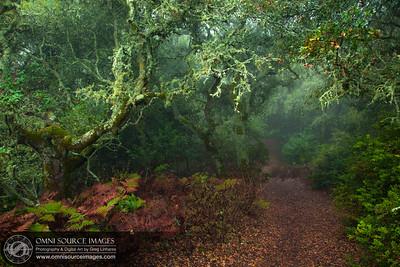 Foggy Morning Trail in Huckleberry Botanic Regional Preserve.