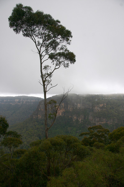 Sydney035