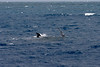 Whale Watch006