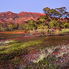 Trees and Red Cliffs