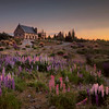 Lupins and the Church of the Good Shepherd