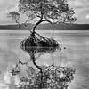 Mangrove, Raja Ampat, Indonesia