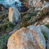 Headland at Point Lobos