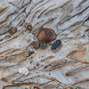 Rock details, Point Lobos State Park