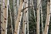 Aspen Grove - Santa Fe