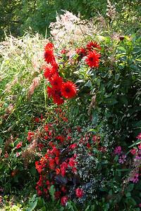 Wild flowers, dahlias and grass at Sacre Coeur