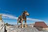 Seera - Sandia Crest, Albuquerque, NM
