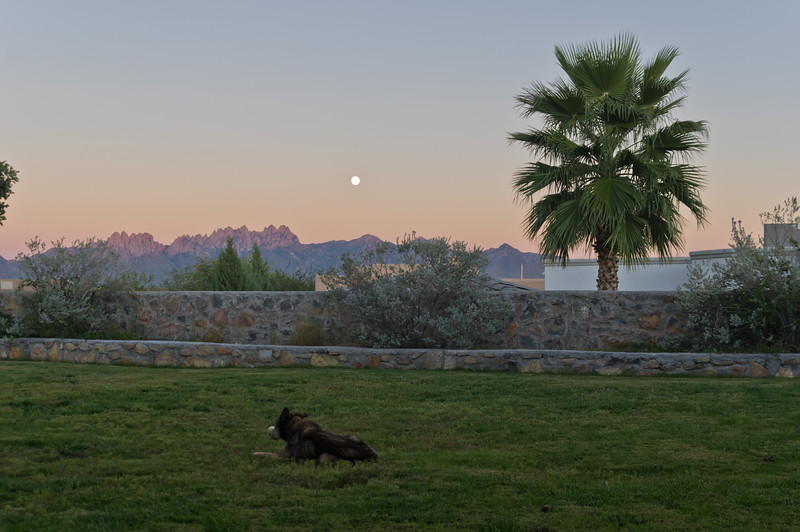 Seera - Organ Mountains, Las Cruces, NM