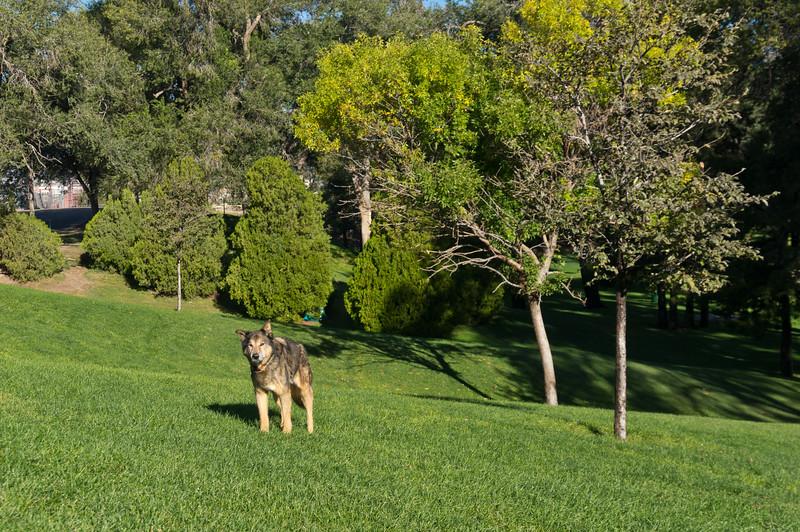 Seera - Roosevelt Park, Albuquerque, NM