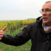 Erik Szablowski, an official Burgundy wine educator, took us into the vineyards to fully understand and see Chablis terroir.