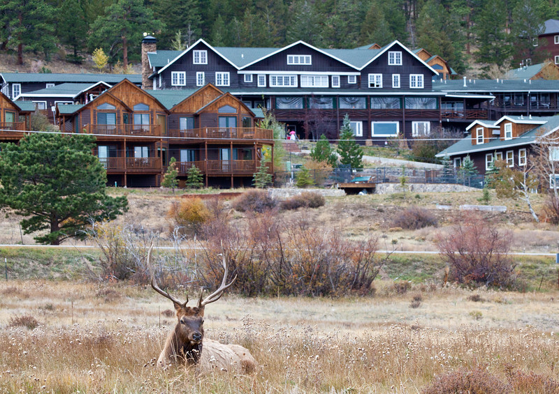A large bull elk lounges in the meadow below Mary's Lake Lodge. Estes Park, Colorado