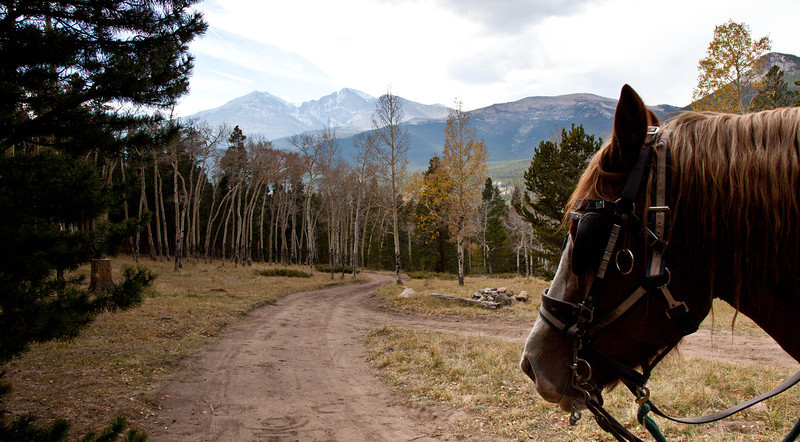 A hitched team pulls a wagon with Long's Peak in the background. Estes Park, Colorado.