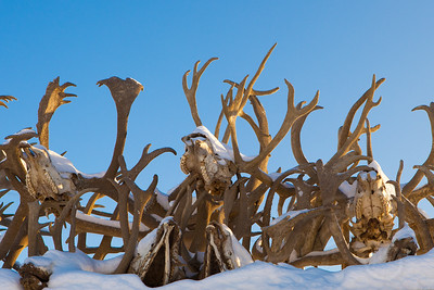 Caribou Antlers as roof adornment. Kotzebue, AK