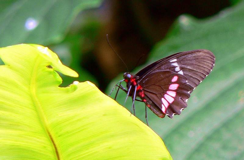 The conservatory features over 2000 exotic butterflies of the world.
