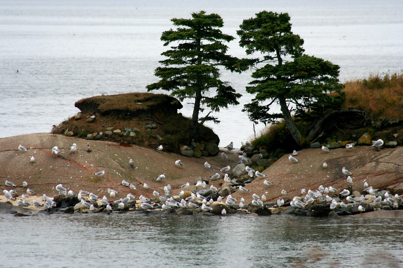 lookout point, gulls on island