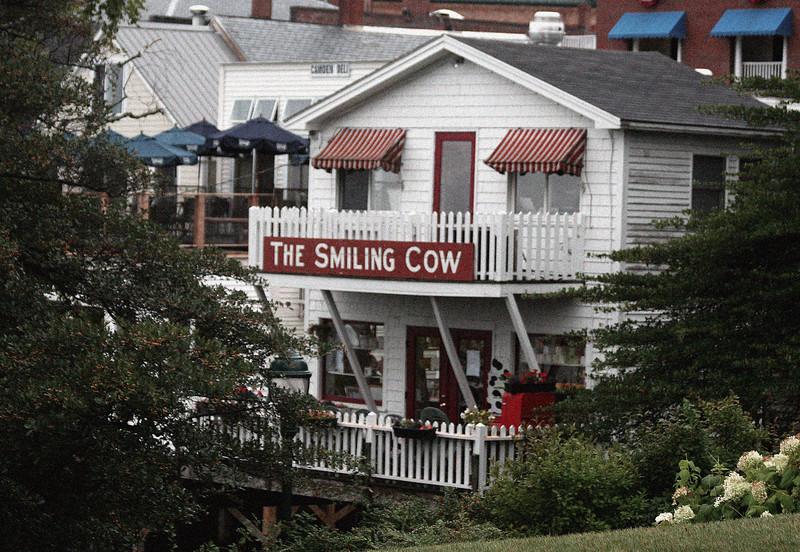 camden smiling cow