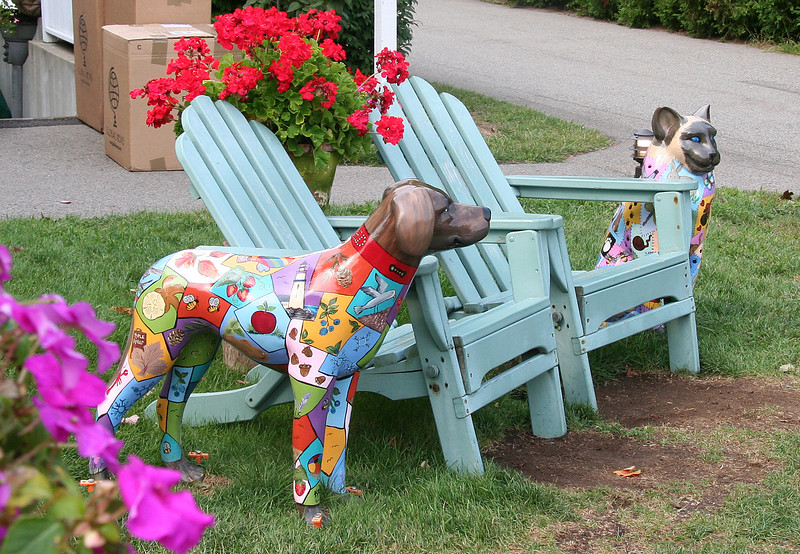 ogunquit, painted dog