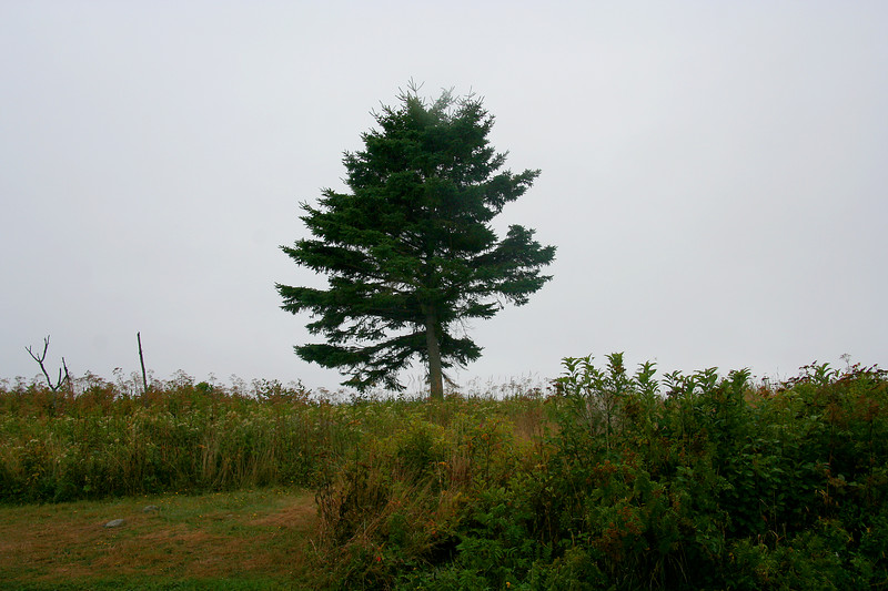 lookout point, lone tree