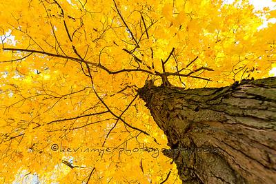 Ohio Autumn Foliage