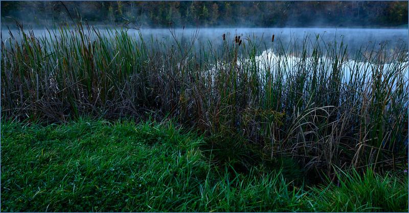 Wild Grass at Indigo Lake