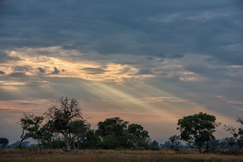 Light rays over the savannah, Okavango Delta, Botswana.