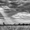 Sun beams over the savannah, Okavango Delta, Botswana.
