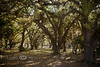 Beautiful Canopy under the Live Oak Trees - Kissimee River Ranch