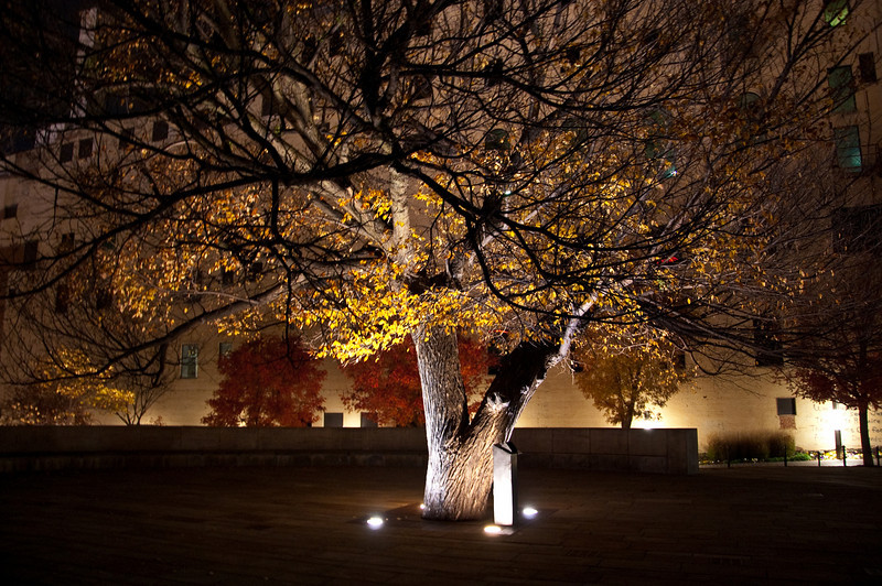 Survivor Tree (Oklahoma City)
