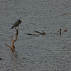 Blue Heron (Oklahoma City)